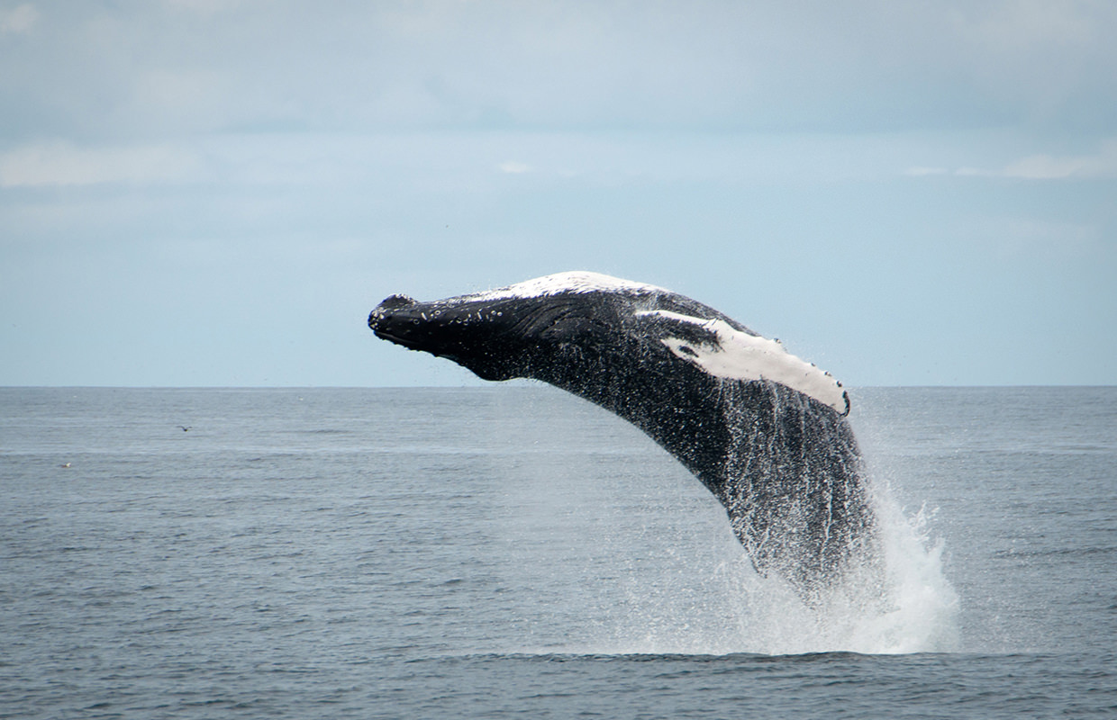 whale watching reykjavik tours iceland special tours