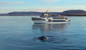 Reykjavik Whale Watching Humpback Whale Fluke